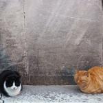 【トルコは猫天国だ】