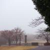 【The fog】