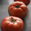 【お知らせとトマト】