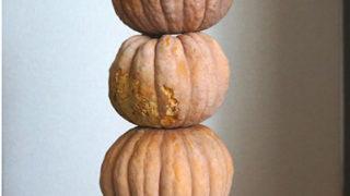 (日本語) 【畑で育てたかぼちゃ】