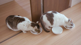【猫と暮らし始めました】
