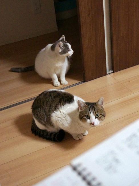 猫 餌 手作り