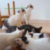【猫たち民族大移動の謎】