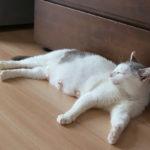 (日本語) 【猫から学ぶ女らしさ】