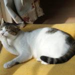 (日本語) 【クリームパンにくお】