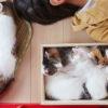【猫とお昼寝】