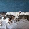【猫たちの熱中症対策】