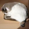 【猫カースト】