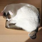 (日本語) 【猫カースト】