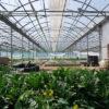 【カナダその12 アクアポニックの農園探訪】