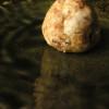 そば粉のごぼうクッキー