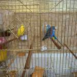 【トルコの鳥】