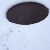 【雪の日の過ごし方】