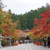 【和歌山の梅を巡る旅 その1】