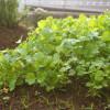 【育てたハーブやお野菜の種を取っておく時のポイント】