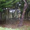 【クモの巣】