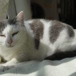 (日本語) 【猫にお薬を飲ませる方法 錠剤編】