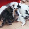【猫の毛を取る方法】