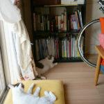 (日本語) 【猫模様】