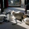 【冬の猫の過ごし方】