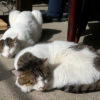 【猫は寝る】