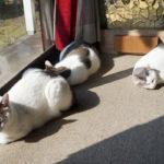 【猫と人間の自己防衛手段】