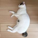 (日本語) 【撫でてください】