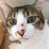 【猫はかすがい】
